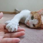 初対面の猫ちゃんと仲良くなろう!猫界のマナーや接し方のコツについて