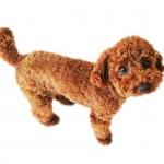 愛犬に与えたい食材の納豆について。手作り犬ゴハンのレシピも!