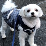 愛犬用お洋服の洗濯から収納まで、我が家のお洋服管理方法をご紹介!