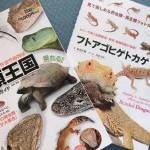 憧れの爬虫類!フトアゴヒゲトカゲの飼育方法を調べてみました!