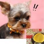 愛犬に栄養満点の玉子を!玉子を使った犬用レシピもご紹介◎