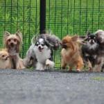犬を飼ったら、ぜひオフ会へ。オフ会参加のメリットや気を付けたいこと。