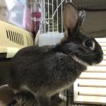 ウサギを飼いたい人向け、お迎えする前の動物病院探しのススメ