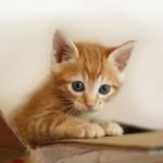 子猫を拾ってウチの子にするまでの5ステップ~私の子猫保護体験~