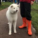 お散歩がてらでも大丈夫!日本犬保存会の展覧会を見に行ってみよう!