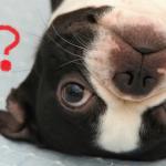 愛犬がくしゃみ鼻みず・・・もしかして花粉症?犬も花粉症になる??