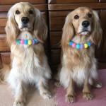 ニードルフェルトで愛犬の首飾りを作ろう!
