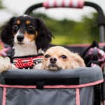 犬用ペットカートを使う理由。その用途は?必要性は?
