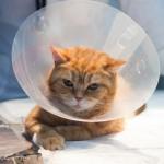 黒猫ネロ君の去勢手術レポート!猫の不妊手術について