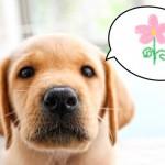 愛犬のために必ず知っておきたい!!意外に知られていない犬にとって危険なお花や植物
