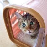 災害時、猫多頭飼いさんの同行避難に役立ちそうなアイテムをご紹介☆
