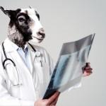 どうやって選ぶ?どんな病院を選ぶ?ペットにも飼い主にも重要な、動物病院の選び方!
