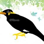 おしゃべりが楽しい九官鳥と暮らしてみよう!~九官鳥の生態とお世話の仕方~