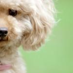 犬を飼う前に、知っておきたい心構え