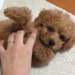 子犬を迎えるために用意しておきたい&便利なペット用品19種紹介!