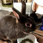 ウサギに与えたい、体に優しい自然派おやつ4選
