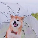 雨の日の運動不足を解消しよう!愛犬と室内で楽しく遊ぶ方法!