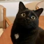黒猫に授けられる幸福の印!「エンジェルマーク」と動物の毛色の秘密について
