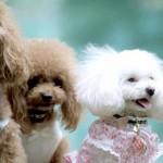 レインコートやマナーパンツ、術後着…普段は使わないけど、持っていたい愛犬用ウエア。