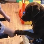 【おうち時間】愛犬と室内で遊ぶアイディアを紹介★