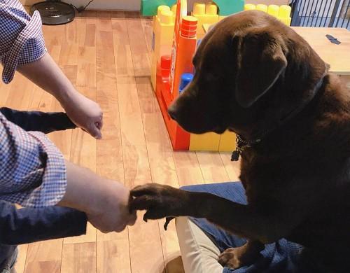 犬とゲーム