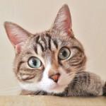 知られざる、猫の魅力