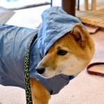 愛犬連れの出先で突然の雨。でも大丈夫。室内ドッグランのすすめ【埼玉・栃木・茨城・群馬編】