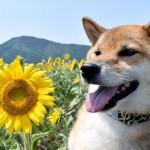 愛犬と一緒に行ける!夏のフラワースポットin関東