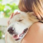 愛犬が快適に過ごせる安心なペットホテルを選ぼう!