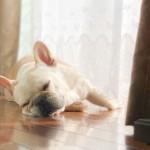 愛犬の暑さ対策。お留守番犬の室内環境を整えよう!