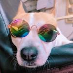愛犬にも紫外線対策を!~紫外線による病気とオススメ紫外線対策グッズ~