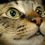 猫が白目で寝てる…?猫の第三のまぶた「瞬膜」について