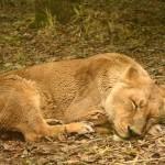 暑いからこそ楽しい!!元飼育員が夏の動物園の楽しみ方をお伝えします☆