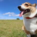 夏は愛犬と高原リゾートへ【長野編】