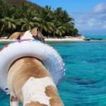 愛犬と海遊び・川遊びを楽しもう!