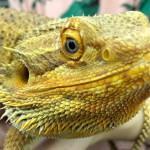 浅草にある爬虫類・小動物カフェPiccolo Zooさんに行ってきました!