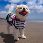 愛犬と一緒に旅行するなら、伊豆エリアがオススメ!