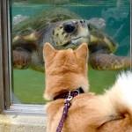 いつもと違う世界へ。愛犬と水族館はいかがですか?