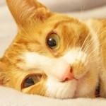 愛猫の食欲がない!? 原因と対策をご紹介