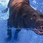 自宅で水遊び!プールが苦手な愛犬とトレーニング