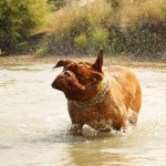暑い夏にお役立ち!犬におすすめの夏グッズをご紹介!