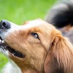 愛犬と一緒に楽しめる秋のイベント。楽しいひと時を愛犬と過ごそう♪