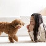 初心者・子供がいるおうちでも飼いやすい犬種って?