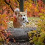 夏から秋へ。季節の変わり目に愛犬の体調に気を付けたいこと。