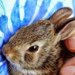 いつでもどこでもウサギと一緒にいたい方に!ウサギモチーフのアクセサリー5選