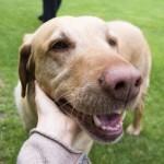 犬と触れ合える施設6選【関西エリア】