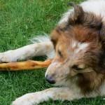 犬のジャーキーどう選ぶ?安全・安心・おいしいを満たす製品を選ぶコツ