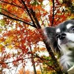 行楽の秋到来!愛犬同伴バスツアーでプチ旅行を楽しみませんか?