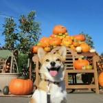 愛犬にも与えたい秋の食材とNG食材
