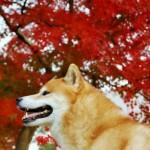 愛犬と行きたい!関東のおすすめ紅葉スポット3選